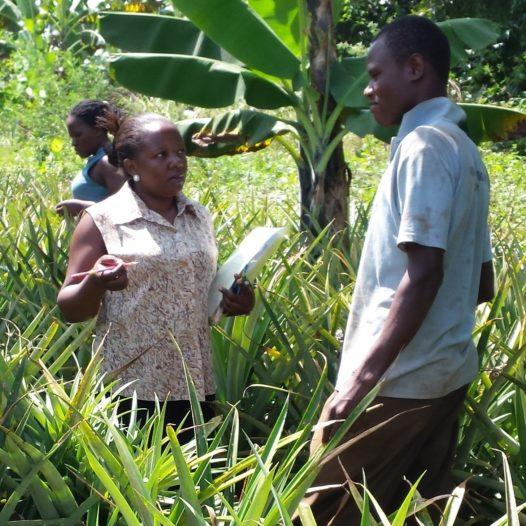 Agricultural Economics and Rural Development (Doctoral Studies)
