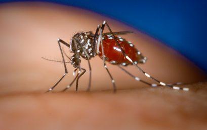 "AGEP-Webinar ""Neglected Tropical Diseases"""
